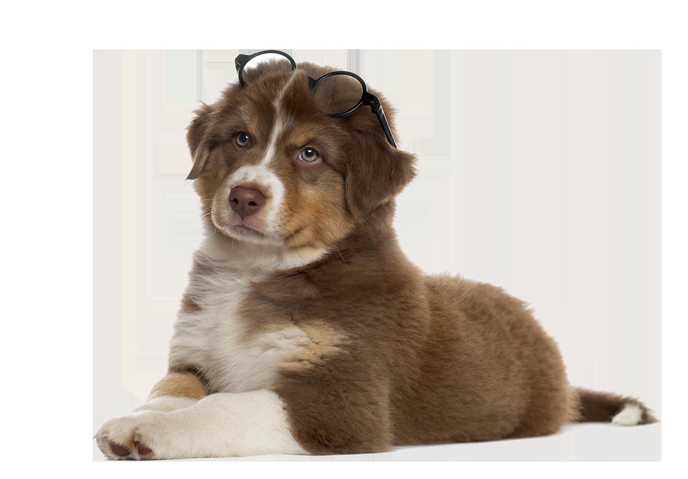Impresum Hund