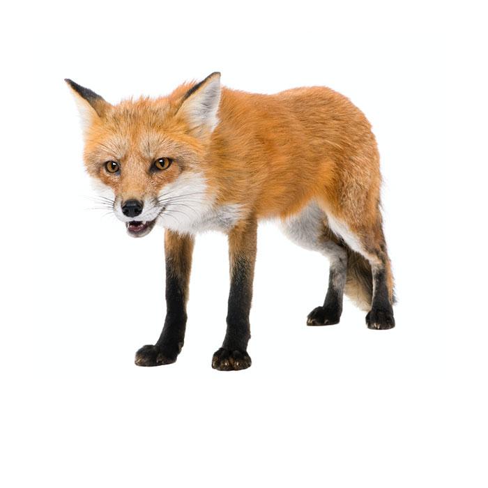 Inkasso-Zwischenseite-Fuchs2